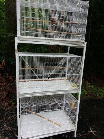 2 Breeding (proven) pairs of cockatiels and 3 cages.