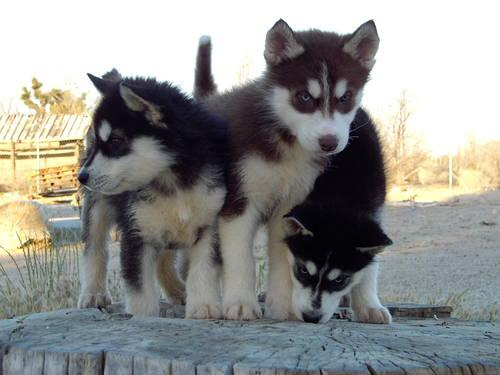 ALUSKY * Only 1 Left!!! * 2 mos. for sale in Palmdale ...