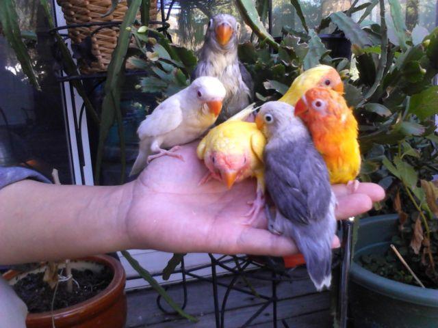 Babies LoveBirds