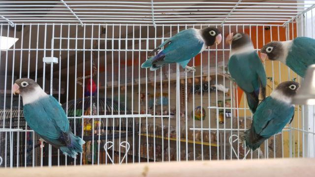 BAY AREA BIRD EXPO!!!! (www.exoticbirdmart.com) Sunday August 14,2016