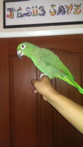 Beautiful Baby Hand Tame Mealy Amazon