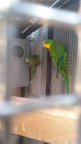Birds for new homes