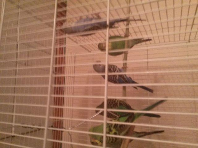 Bookcase Bird Aviary