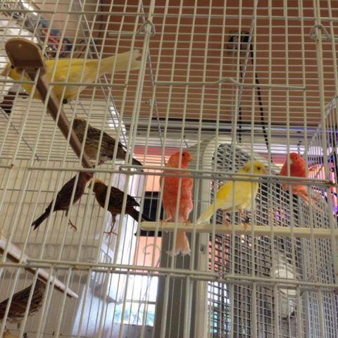 Canaries $50 lizard and water sluggers