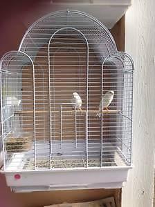 canaries,canay,bird