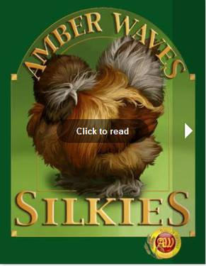 Chicks! Chicks! Chicks! Bearded Bantam Silkies