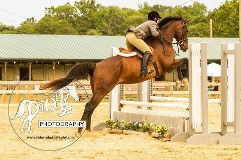 Horse leases and lessons near D.C/Alexandria