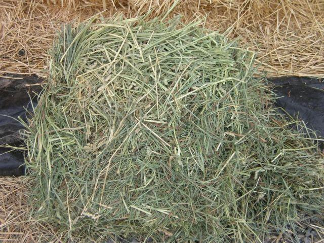Meadow Mix Grass Hay Mostly Orchard