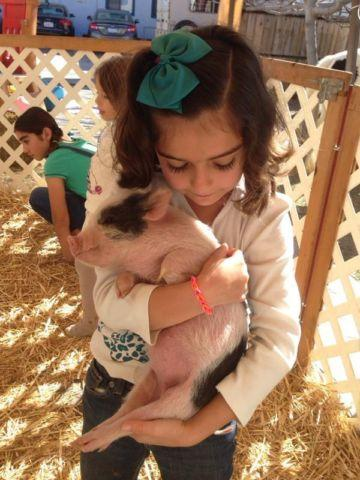 Micro mini baby pig..pigs