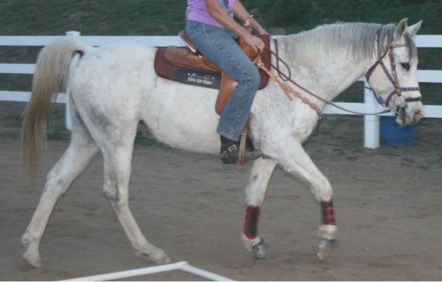 Nice jumper or Barrel horse