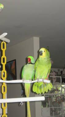 Parrot cage with stand, like brand NEW!