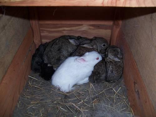 RABBITS! all ages, all colors,breeders, pets or meat