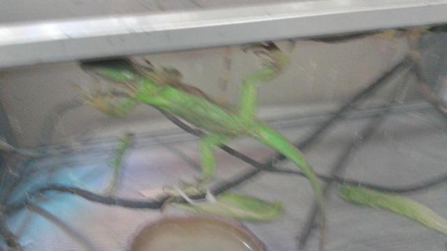 reptiles iguanas, turtles
