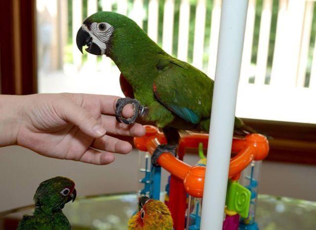 So playful & fun Severe Macaws