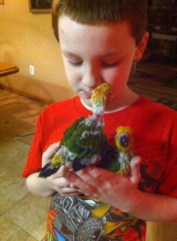 Sun conures and Jenday conure babies