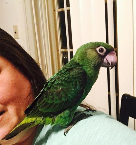 We have the sweetest, prettiest Jardine parrots!