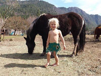 Welsh Cob Torbiano Pony Mare