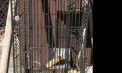 I have 1 large cage on wheels. It is large for very large birds or lizards. $50.00 It will roll where ever you want. It is black with play yard on top needs alittle tlc. Large front door will also roll . It is not hand made you would find it in a pet