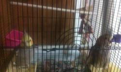 """I have 2 parakeets one blue and one black/yellow. Need to find home. Come get them asap. Cage is large, 30"""" tall by 20"""" wide and 13"""" deep. I can email pictures, file size too large for ebay classified I guess. Thanks in advance"""