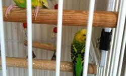 I have 2 super cute parakeets with a large parrot cage, stand and all; accessories to re home. $40 donation required.