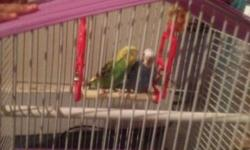 I have 2 parakeets for sale plus the cage and little swing in the cage This ad was posted with the eBay Classifieds mobile app.