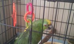 I have a female yellow amazon that needs a new home. I am unable to give her the attention that she deserves because of work. She loves females and loves to sing along to Disney songs and kid movies. If you are interested please contact me @ 916-220-4042.