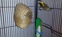 Gadget (female) and Gizmo (male) are in need of a new home. 2 Yellow Crown Weaver Finches (Male & Female) Everything is brand new and about a month old. Cage Plastic double cups and 3 wood perches Bottom grille and drawer slide out for cleaning 31-Inch