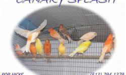 I have 2 young cocktiels birds with large cage