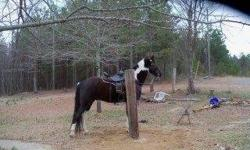 I have 3 horses with saddles im selling kids no longer want to take care of them. 7yr gelding rides good has a lil spunk 11yr gelding rides great 2yr mare green broke 205-300-3120 205-435-4007