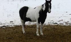 Double S Equine Rescue has 3 beautiful mares that need a nice quiet home together. Annie(15), Della(20), Sweetheart(23) are very good girls, they are low in the pecking order. Such sweet sweet girls, but very shy. Annie warms up to people pretty quick,