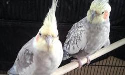 I have 4 cockatiel cages with stands-- $ 15.00 each or all 4 for $ 50.00. I also have couple cages for small birds $ 20.00 each. You can't beat this offer so come get them Cash only e-mail for more info. I also have a few zebra finches for sale for $ 5.00