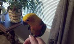 I have a beautiful 4 year old Jenday Conure for sale. We have such a crazy busy schedule that is not allowing him the time he deserves. He was very tame but since we have not had a lot of time to spend with him he has not been held much lately. He did