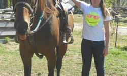 I have an OTTB mare, she is 5 years old, 17hh, dead broke and an absalute dream!! Missy is registered and comes with her papers, she is registered with The Jockey Club under the name Cascade Cassie, (papers are on hand so there will be no hassle, they
