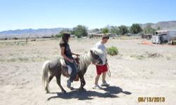 Pony mare 6 - 7 years old dapple grey, aprox 9 hands (VERY) Green broke ONLY. Used as pasture pall and brood mare. Has been lead around saddled with kids on her back. Brushed and loved on by the nieces and nephews and fed lots of treets, but mostly just a