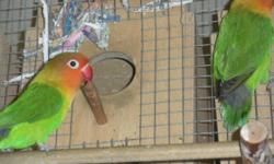 i am selling 6 pairs of beautiful pairs of love birds.they are 100% bonded proven breeding pairs.and had them for few years.they gave me lots and lots of babies.i am selling them because i got no time due to other activity.please give me a call
