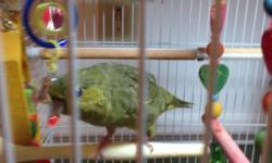 Very sweet comes with cage toys food 200 firm I'm located in aiken sc.