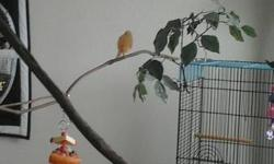 I take in unwanted, homeless, and handicapped birds. I have three huge community flight Aviaries for finches, Doves, and pigeons. Each aviary is separate and house the birds from temperament and size. All birds enjoy free flight all day long and get play