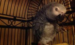 Hi , I am Jake a 16-year-old African gray . I have a large vocabulary and speak no bad words , I do need some training to learn to step up on your hands , but I will take peanuts from your hand Gently. Unfortunately my owner is unable to provide me with