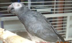 Must rehome grey ASAP. You will need your own cage. The one I have just broke. She does tons of sounds. Has conversations with herself, even asks herself a question then answers. She's tons of fun. Hate to rehome her, but I have no choice. Please contact