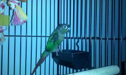 african grey parrot don't know if its a girl or boy .we think boy . no eggs. will sell the bird for $700.00 cash firm (no cage ) frankfort ,ohio 45628