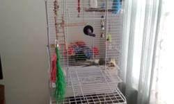 I am selling all three birds and asessories together. African Grey is a Timneh. The price is a good deal. I must sell due to husbands health. I have raised them from babies. #419-841-3246 if no answer leave message and will get back to you!