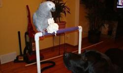 Beautiful African grey parrot, 14 years old. Has a large vocabulary! Zero health problems in his 14 years. He has mostly bonded to one person (me) and I am a male, so best primary owner would likely be a male. Kids love him but as with all parrots he will