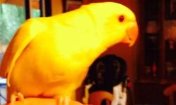 These ringnecks are about 3 months old. Re-homing fee $60. Their capable of speaking. Females and Males available. If interested or have any questions contact me at (408)497-3496. Ask for Fred. Call only will not respond to texts