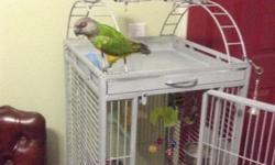 Hi I'm selling a pair of tamed African Senegal parrots you can use them for breeding or as pets the male talks quite a bit the female is 3.5 years old and the male is about 3 years old they are in perfect feather if you have any questions please call