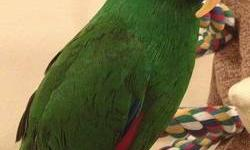 I have a very young Alexandrine Parrot or Parakeet for sale. I don't know whether it's a male or female. She/he says several things. I have not had the time to take the bird out of the cage to tame him. I can sell him with or without his cage. The cage is