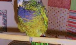 Young Alexandrian parrot for sale. Tame and talks. Very beautiful bird! Also have some very nice cages for sale. Price is without the cage.