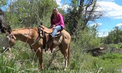 he is a all around nice gelding VIDEO: http://youtu.be/8X2-LR5ZK8I website: http://jmranchhorses.com/ SNICKERS: Beautiful 7yr 14.3hh paint gelding he is awesome, anyone can ride him, gentle and safe walks, trots, canters, moves off your leg, crosses