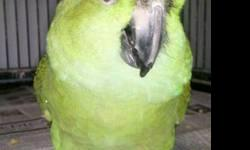 Amazon - Jackson - Medium - Adult - Bird Meet Jackson, a 17-year old double yellow naped amazon. Native to Mexico and Central America, amazon parrots have a potential lifespan of 50-70 years of age. While most amazons have incredible speaking and/or