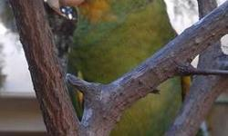 Amazon - Noah - Medium - Adult - Male - Bird Noah is a male Double-yellow headed Amazon who was found and turned in to PEAC. He enjoys the company of other birds and is also interested in human interaction. He came in a TINY cage and is learning to
