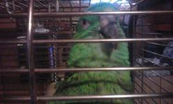 Hi I have an amazon parrot that I need to re-home. I do not have the time for him any more. He is a good boy he does talk says alot of words. So are not so nice. He stays on his cage all day and loves it. He is use to cats and dogs, he will come to you